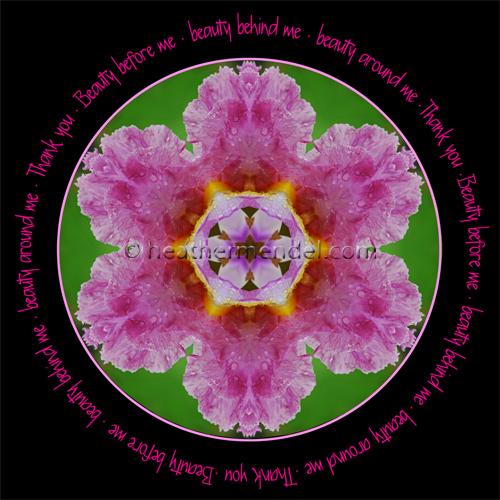 pink-iris_2013